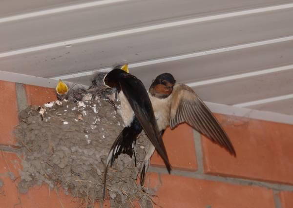 Посмотрите на птиц! - фотоальбомы - зов орла.