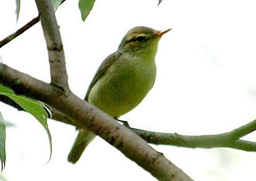 Так какую же птичку называют Малиновкой.  Жизнь прекрасна.  Отражая краски жизни, мы часто...